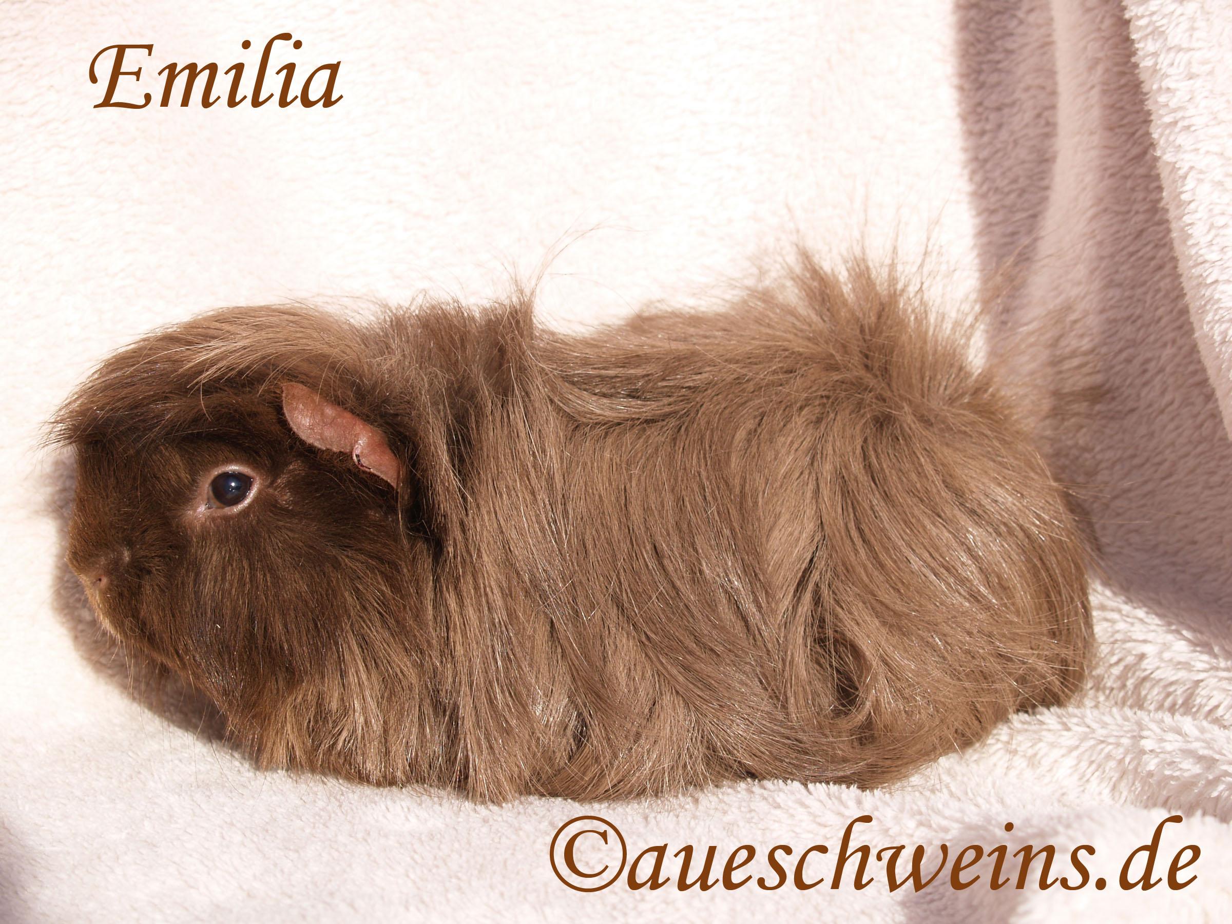 Emilia von den Aueschweins