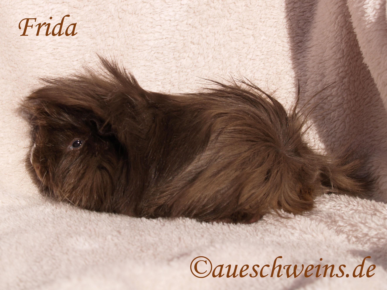 Frida von den Aueschweins