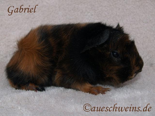 Gabriel von den Aueschweins