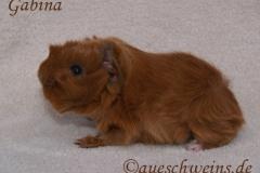 Gabina von den Aueschweins