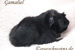Gamaliel von den Aueschweins