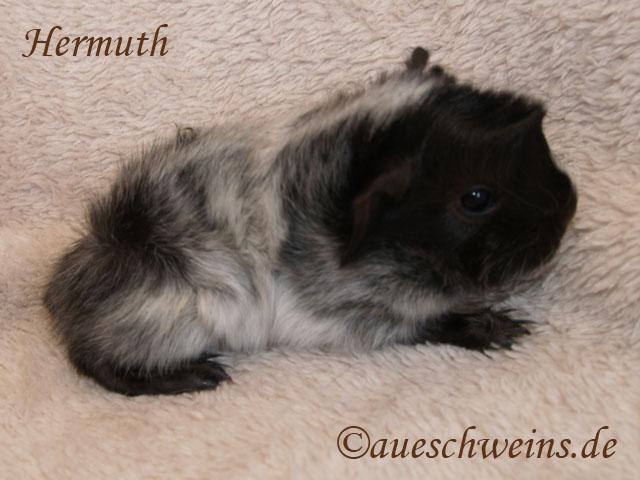 Hermuth von den Aueschweins