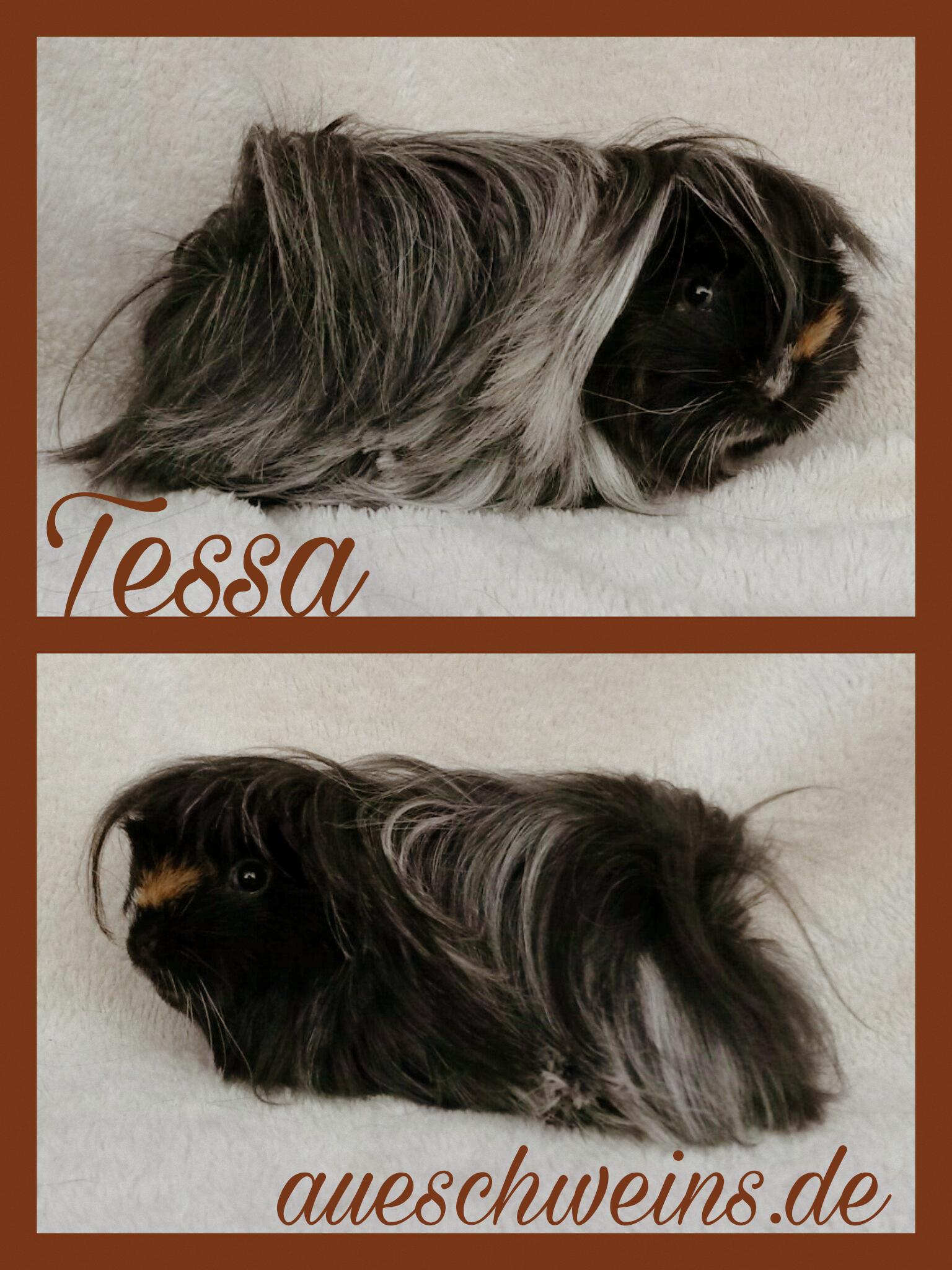 Tessa von Tinas Meeries