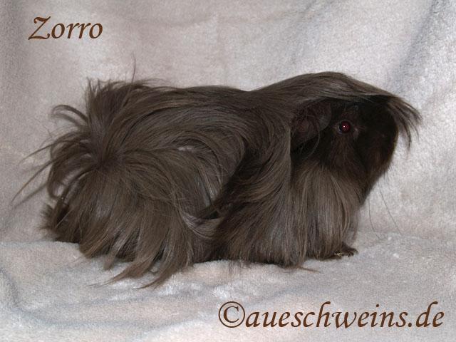 Zorro von der Brunsburg